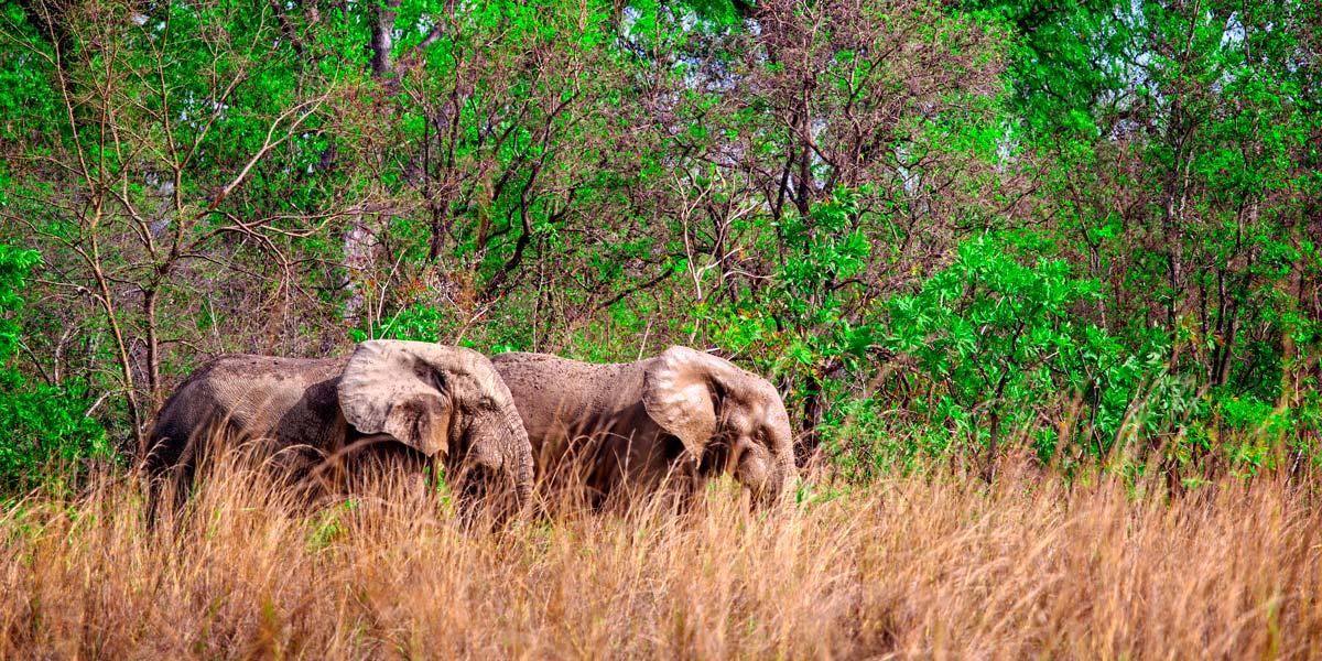 Il Parco Nazionale Mole è il parco più grande del Ghana e si estende per quasi 5 mila chilometri quadrati
