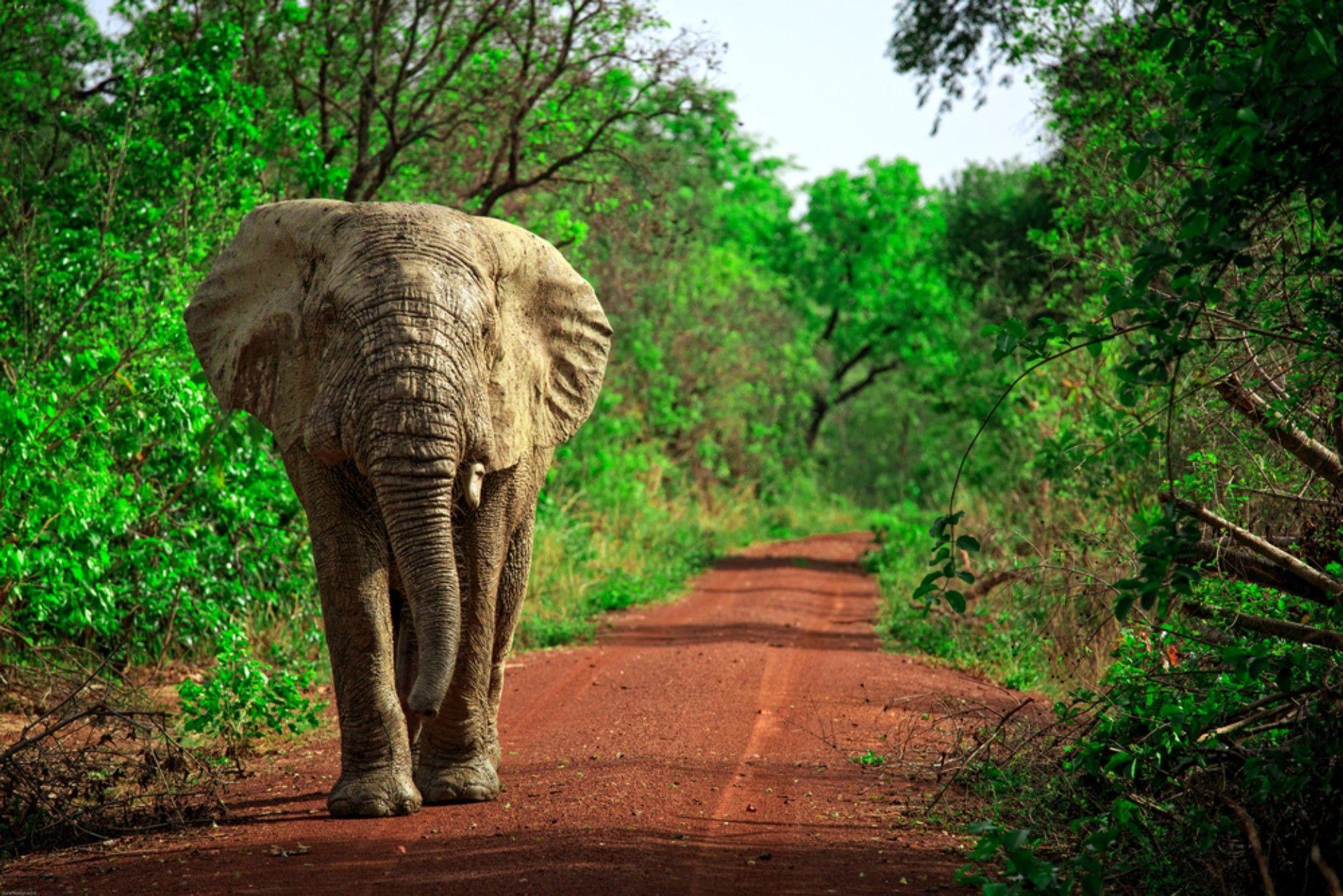 Mole National Park, visitare il Ghana
