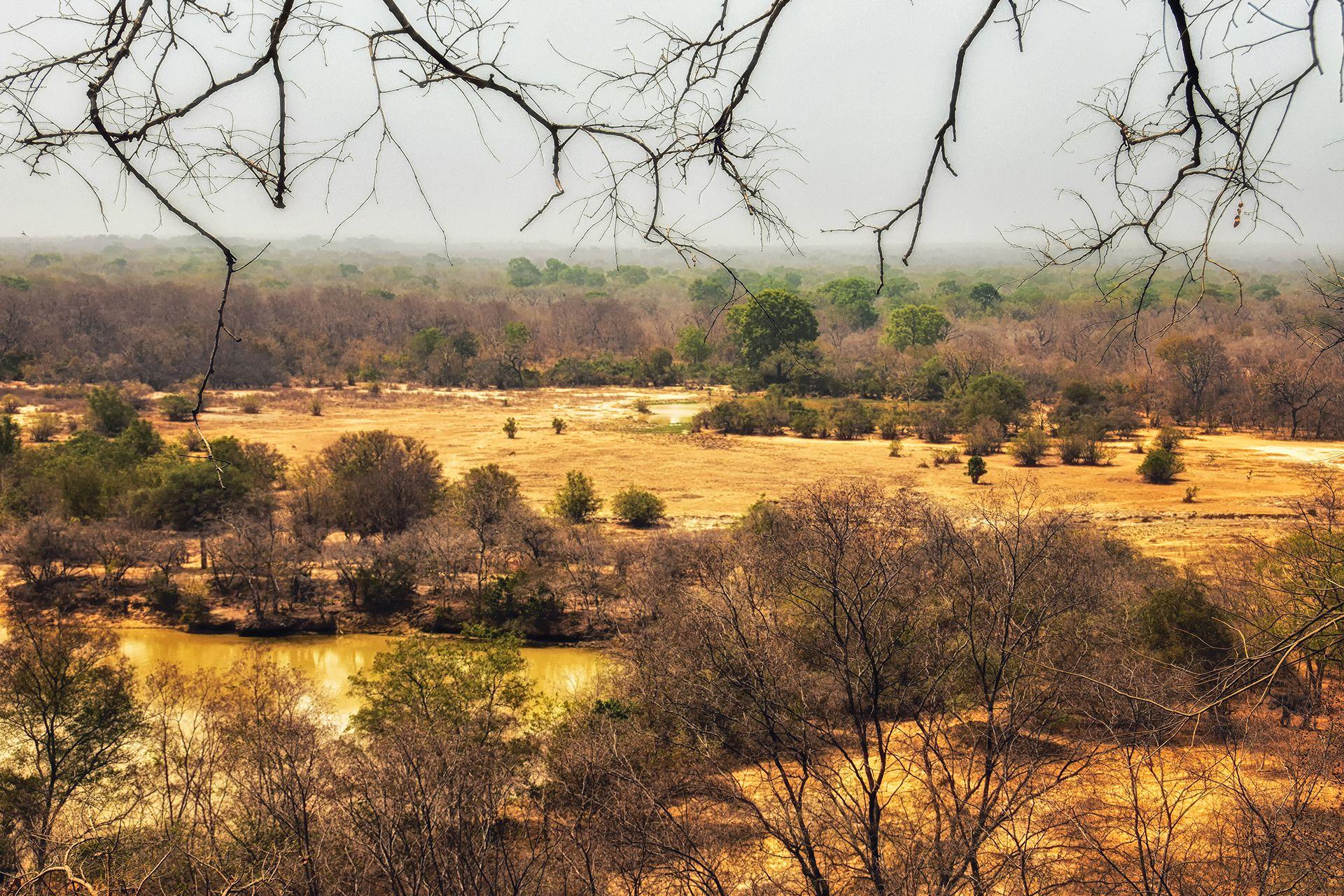 Paesaggio e foresta del Ghana