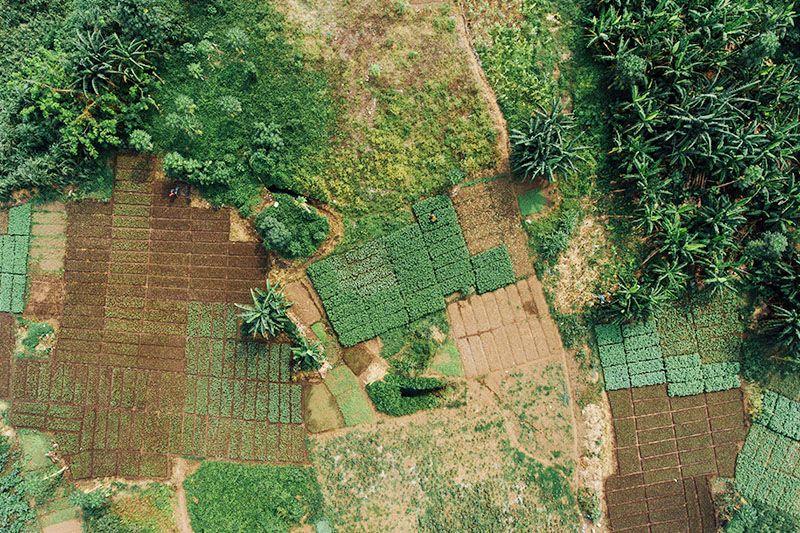 Agricoltura in Ghana