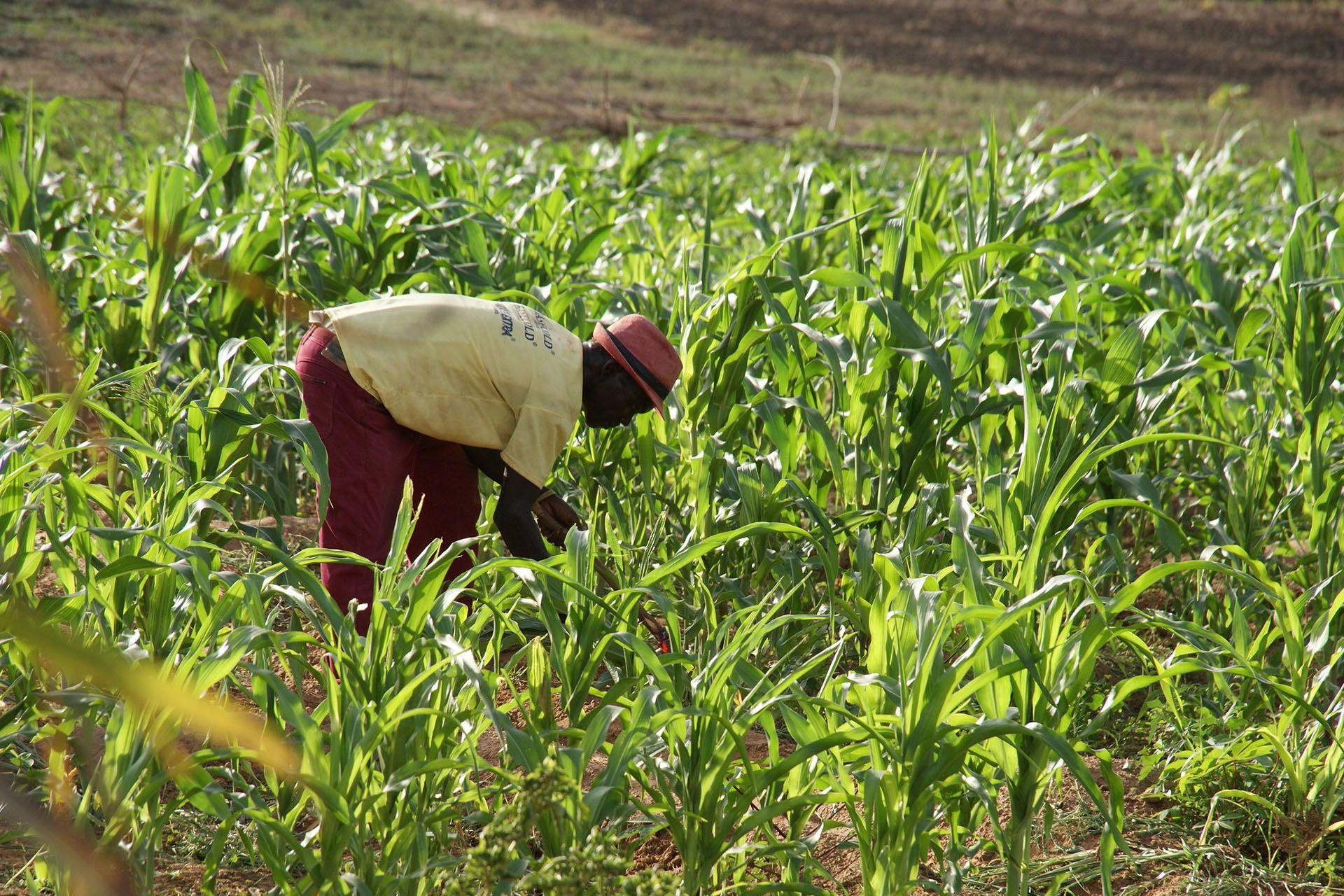 Campus per imprenditori agricoli